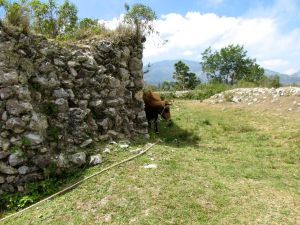 Resident cow has access to interior of fort.  Watch where you step!