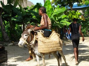 Traditional Haitian transportation.
